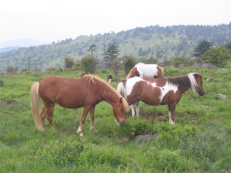OMG Ponies!